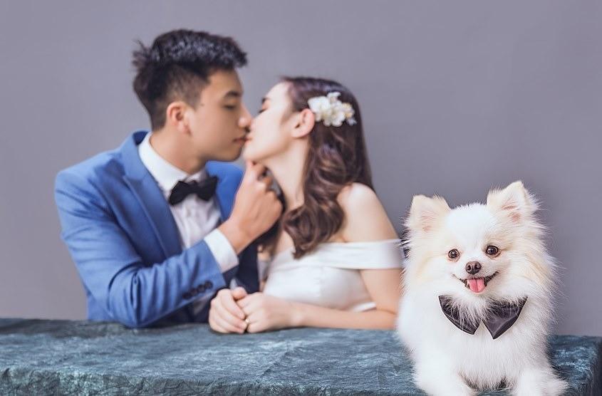 Thú cưng là một người bạn đồng hành tuyệt vời cho bộ ảnh cưới của cô dâu